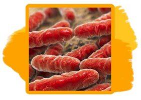 Зона бактерий